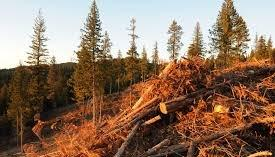 Biomass will play a critical role in Europe's energy future
