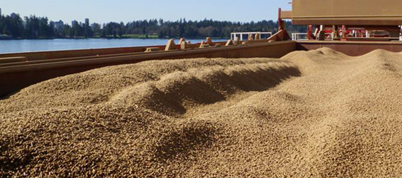 Wood-pellet industry good for environment, economy