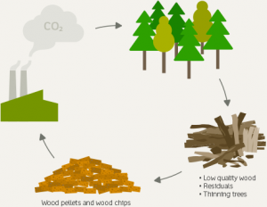 SUSTAINABLE BIOMASS – You take a tree, you plant a tree