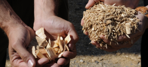 Does bioenergy have a green energy future in the US?