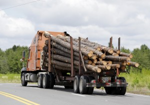 Timber business booming as demand surges worldwide